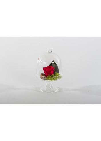 Alzatina in vetro H. 16,5 cm con fiore stabilizzato 2 assortiti D5752 Cuor di Rosa Cuorematto